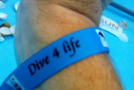 DE WARMSTE WEEK - STUDIO BRUSSEL -DIVE4LIVE